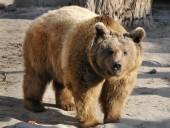 Hosszú lesz a tél a medvék szerint