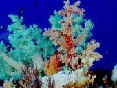 A korallok jelenthetik a kulcsot az UV elleni védelemben